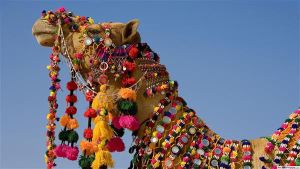 Golden Fair - Golden Triangle With Pushkar Fair