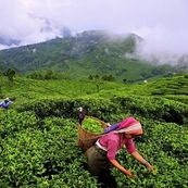 Munnar Tour Packages in India